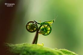 Creative Photography Creative Insect Macro Photography By Tustel Ico Design Swan