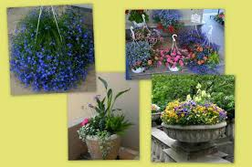 Plant Combination Ideas For Container Gardens Creative Container Gardening Ideas Birds And Blooms