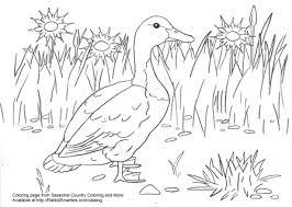 swedish duck coloring u2013 rabbit smarties creative resources