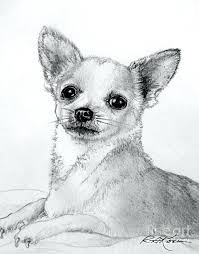 coloring pages chihuahua puppies chihuahua coloring page puppy coloring pages chihuahua coloring