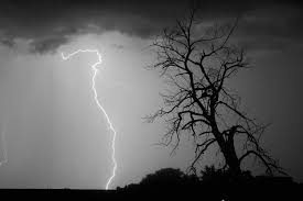 lightning tree silhouette black and white photograph by bo insogna