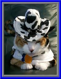 Cool Cat Halloween Costume 78 Cat Hat Images Animals Funny Animals