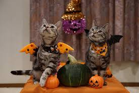 animals halloween wallpaper cats two pumpkin halloween animals