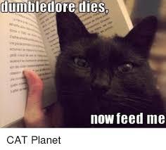 Feed Me Meme - dumbledore dies now feed me cat planet dumbledore meme on me me