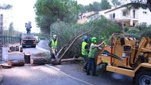 bureau de change antibes petition update mr leonetti replantez nos arbres aux semboules à