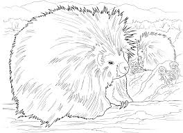 porcupine coloring page free porcupine coloring pages to print 1216