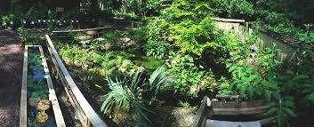 native pond plants for sale native plants blog butterfly rearing cage gift shop landscape