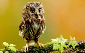cute pics for background background free hd top most downloaded wallpapers page 6