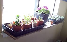 Window Sill Inspiration Popular Of Window Sill Plants Inspiration With Pallet Wood Window