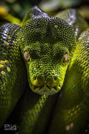 1537 best węże żmije images on pinterest beautiful snakes