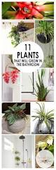 Easy Apartment Plants Best 25 Bathroom Plants Ideas On Pinterest Plants In Bathroom