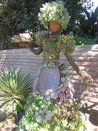 22 best blooms images on pinterest san diego the sans and