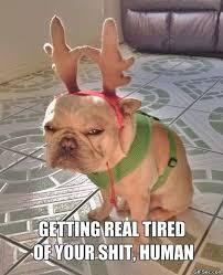 Christmas Dog Meme - funny reindeer dog is not amused imglulz meme dog and meme meme