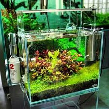Planted Aquarium Aquascaping Pin By Mari Aquarium Tips U0026 Inspiration On Aquarium