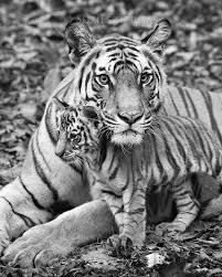 black and white print sets baby prints by suzi