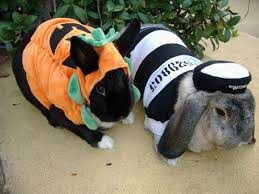 Rabbit Halloween Costume 34 Bunny Images Animals Bunny
