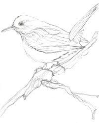 inkwell studios bird sketch