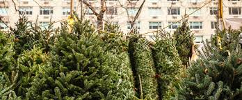 christmas trees for sale christmas tree shortage may drive up the price of your tree this