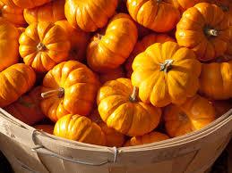 small pumpkins small pumpkins autumn splendor dds small pumpkins