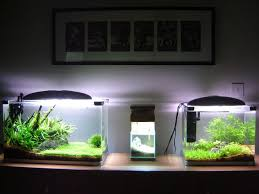 Aquascape Filter 444 Best Aquascape Images On Pinterest Aquarium Ideas