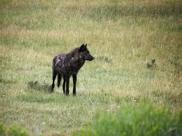 Montana wildlife tours images The wild side wildlife tours treks gardiner mt top tips jpg
