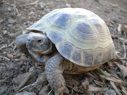 Texas Map Turtle 10 Types Of Turtles You Can Have As Pets