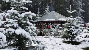 Washington Christmas Tree Farms - keith and scott christmas tree farm in north bend wa parent