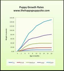 4 month old australian shepherd weight puppy development stages with growth charts and week by week guide