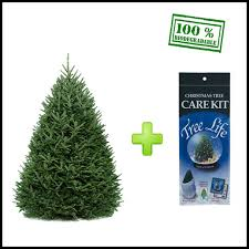 fraser fir christmas tree fraser fir live christmas tree christmas tree shop