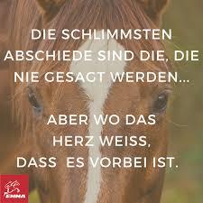 pferdesprüche pferdesprüche www pferdefuttershop de sprüche