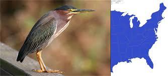 heron meaning birds of bhi bhic org
