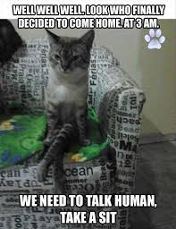 Funny Kitten Memes - lol cats 50 awesomely funny cat photos to crack you up