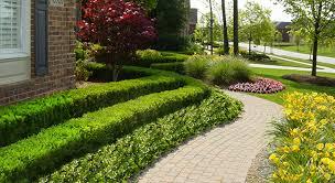 Front Yard Walkway Landscaping Ideas - sidewalk hedge landscape walkway front yard landscaping