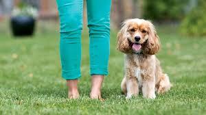 healthy advantage dog food hill u0027s pet