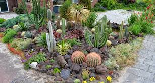rocks in garden design 16 cactus rock garden designs ideas design trends premium