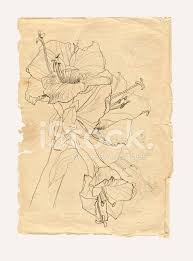 hibiscus drawing on old paper stock photos freeimages com