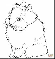 brilliant easter bunny coloring pages printable with bunny