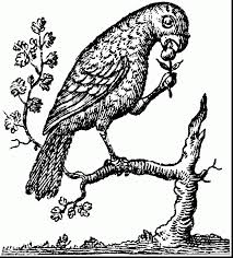 parrots coloring pages incredible amazon parrot coloring page with parrot coloring page