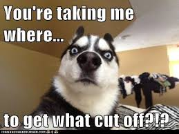 Dog At Vet Meme - a trip to the vet