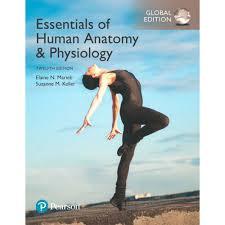 Human Anatomy And Physiology Marieb Hoehn Human Anatomy U0026 Physiology 10th Edition Marieb 9780321927040