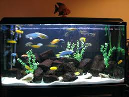 fish aquarium decorations cheap planning ideas awesome carving