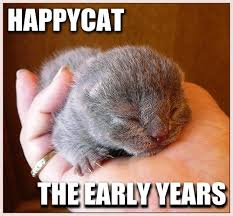 Happy Cat Meme - happycat cat meme cat planet cat planet