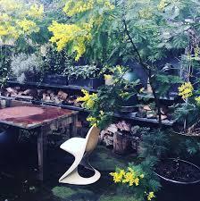 gardening tips for winter in australia container gardening ideas