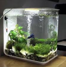 Planted Aquarium Aquascaping Nature Aquarium Cool Ideas Pinterest Aquariums Water And