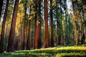 sequoia national forest restaurants open thanksgiving atlanta
