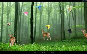 rain forest live wallpaper android apps on google play