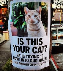 Missing Cat Meme - 20 funny lost and found pet posters