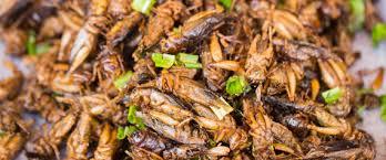 insectes cuisine en thaïlande la gastronomie pour rendre les insectes à la mode