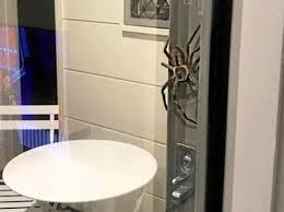 cuisiner araign馥 de mer araign馥 cuisine 74 images araign馥 cuisine 28 images le pour
