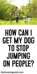 boxer dog training tips the 73 best images about dog training tips on pinterest